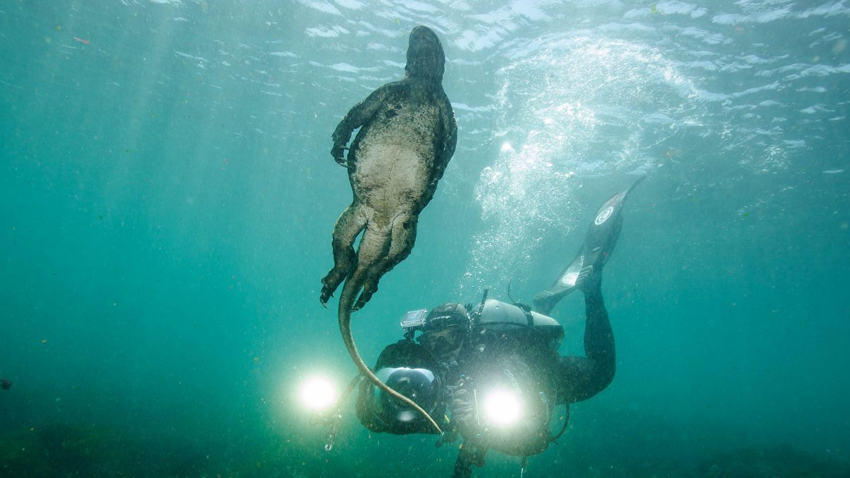 Scuba diving in Galapagos with marine iguanas.