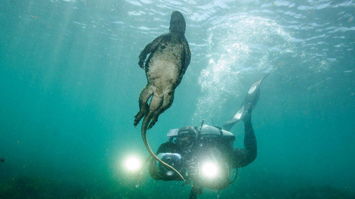 scuba-diving-galapagos-marine-iguana-1200x675.jpg
