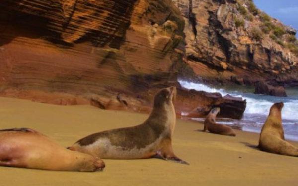 Family`s Galapagos Sea Lion