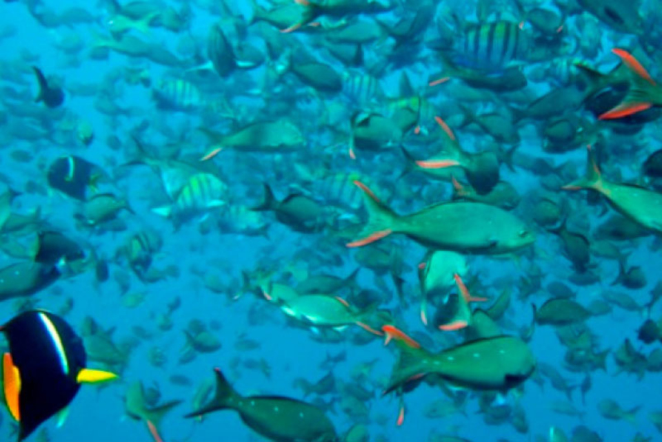 oceanography-galapagos-island-2.jpg