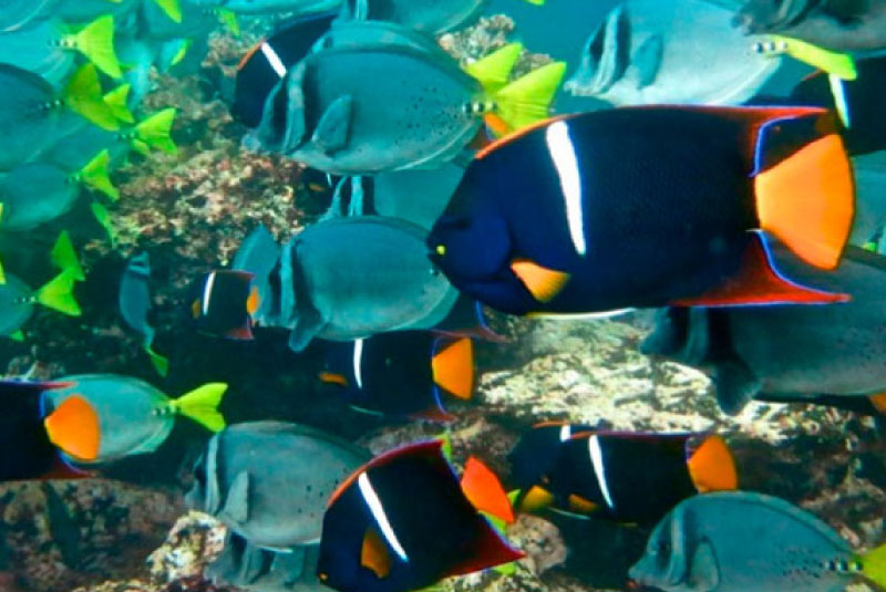 galapagos-marine-species-full-color.jpg