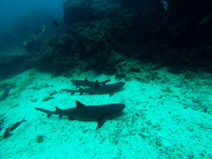 Diving locations in Galapagos