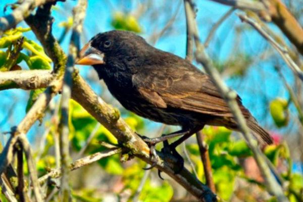 Big 15: Darwin finch