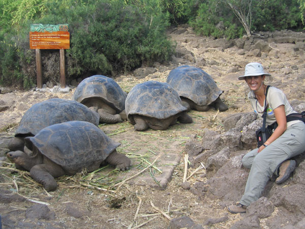 Tortoises in Charles Darwin Research Station
