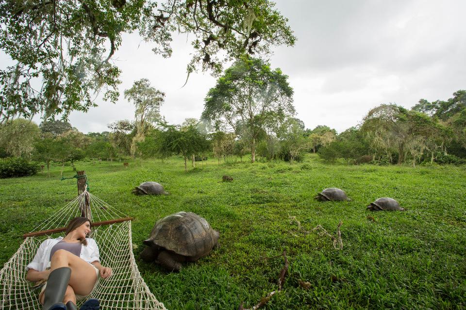 Finch Bay Galapagos tortoise
