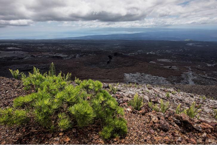 Sierra Negra in the Galapagos Islands