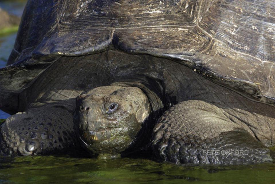 galapagos-giant-tortoise-lodo-1.jpg