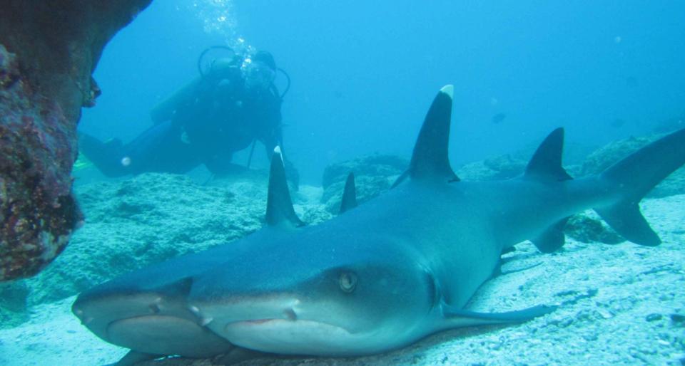 scuba diving in galapagos
