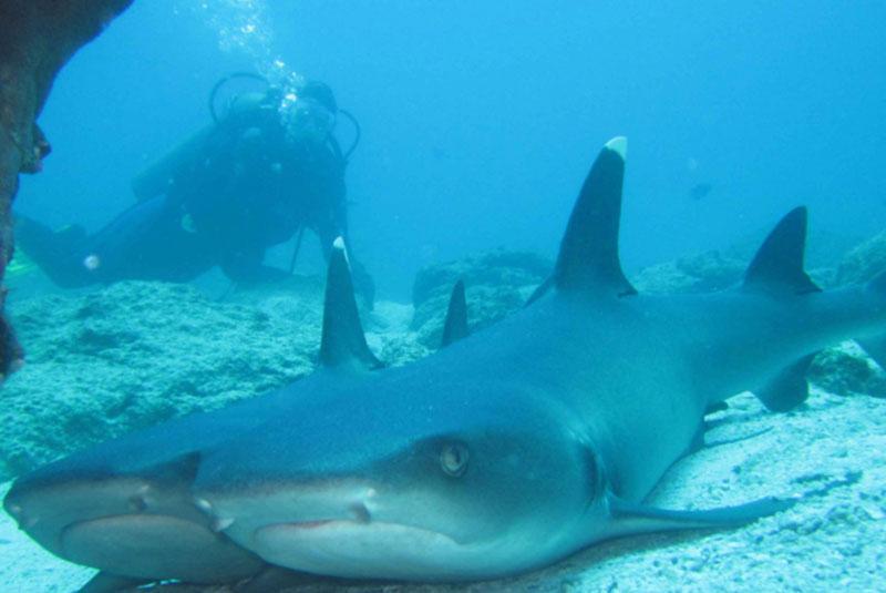sharks-galapagos-island.jpg