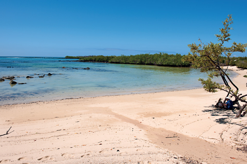finch bay galapagos beach