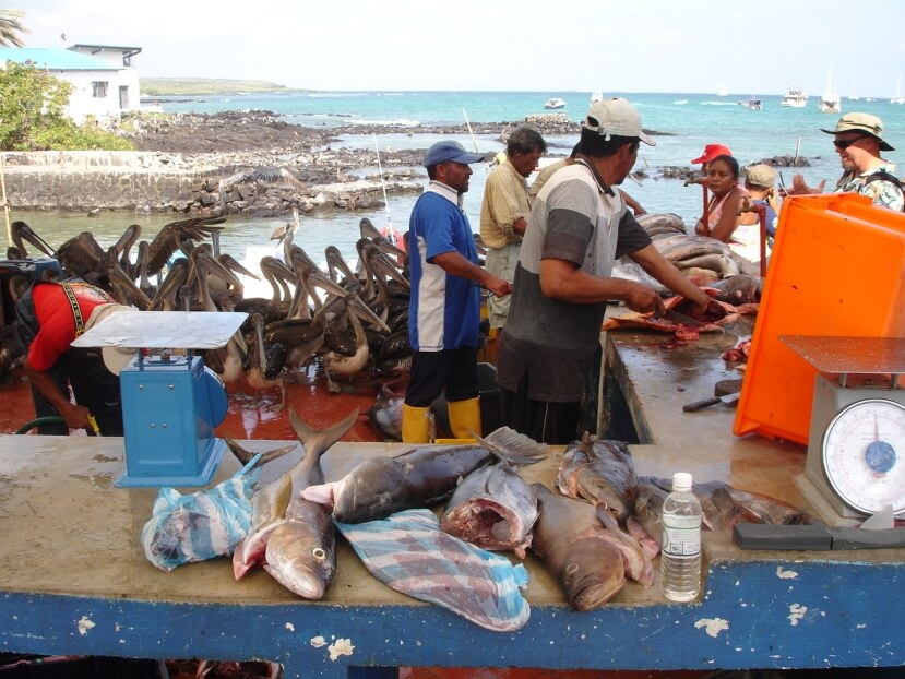 Fish market of Santa Cruz Island in Galapagos