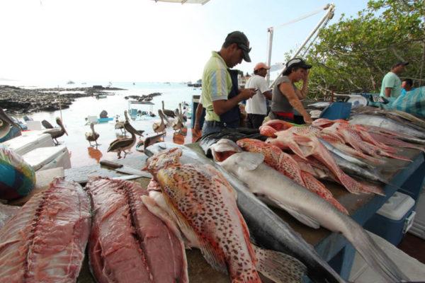 Fish market of Santa Cruz Island in Galapagos