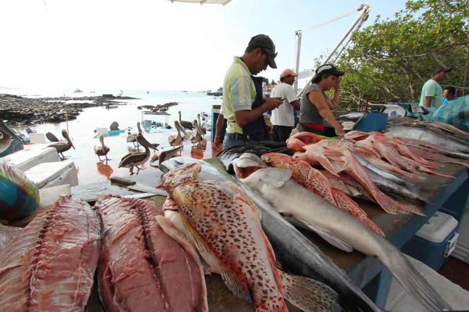 fish-market-santa-cruz-island.jpg