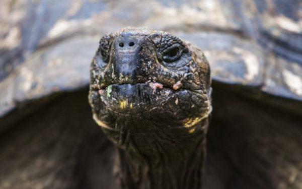 Experience tortoise