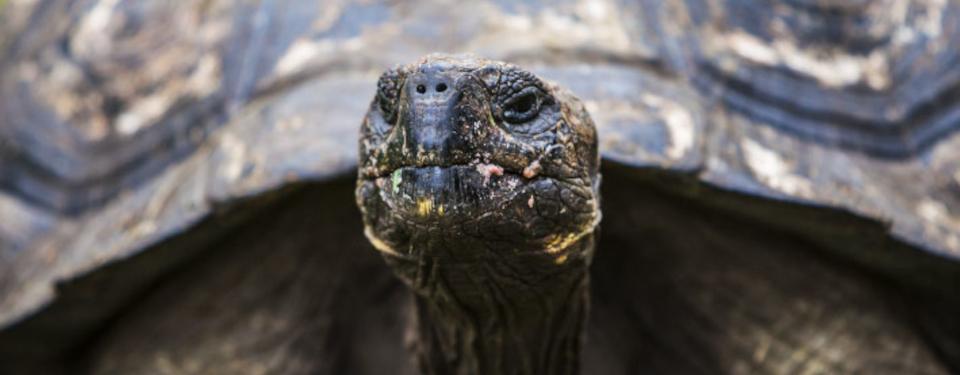 experience-tortoise-1.jpg