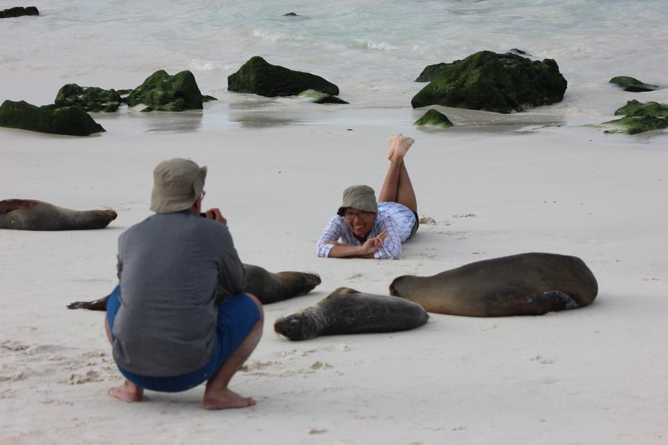 sea lion galapagos guests