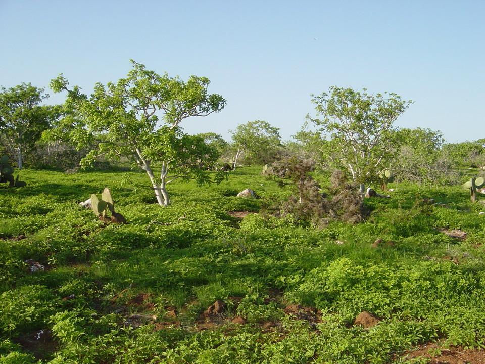 hot seasons in galapagos green