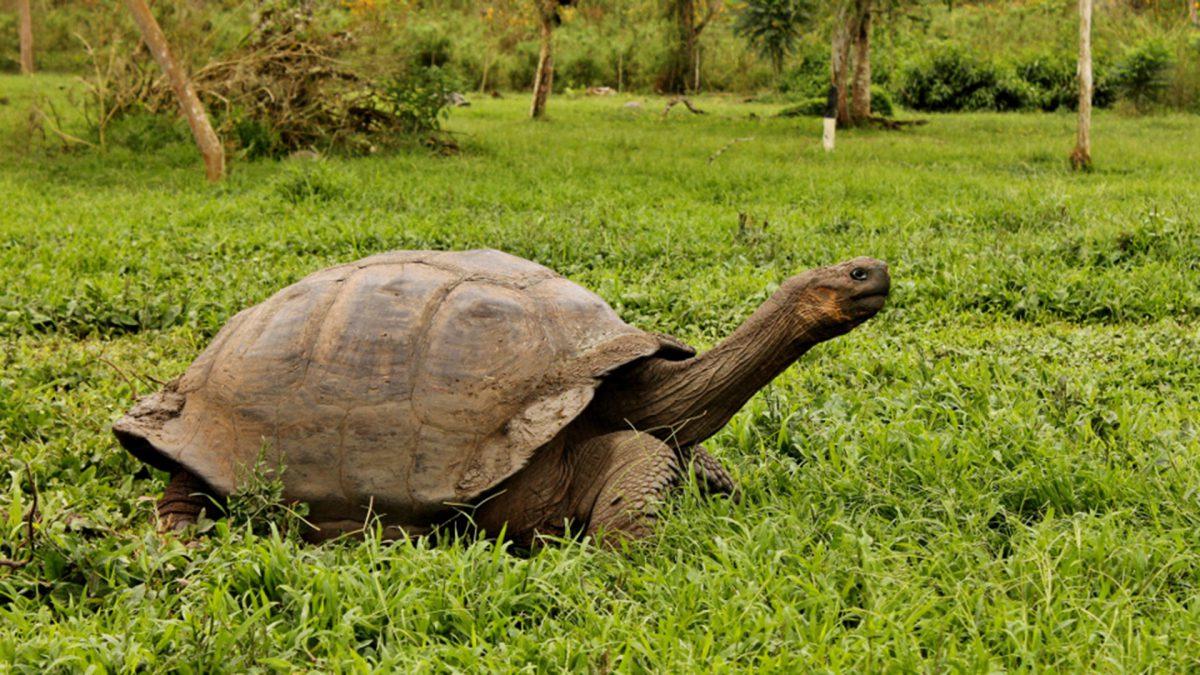 GPS90193-GPS-Generales-B15_Giant-Tortoise-1200x675.jpg