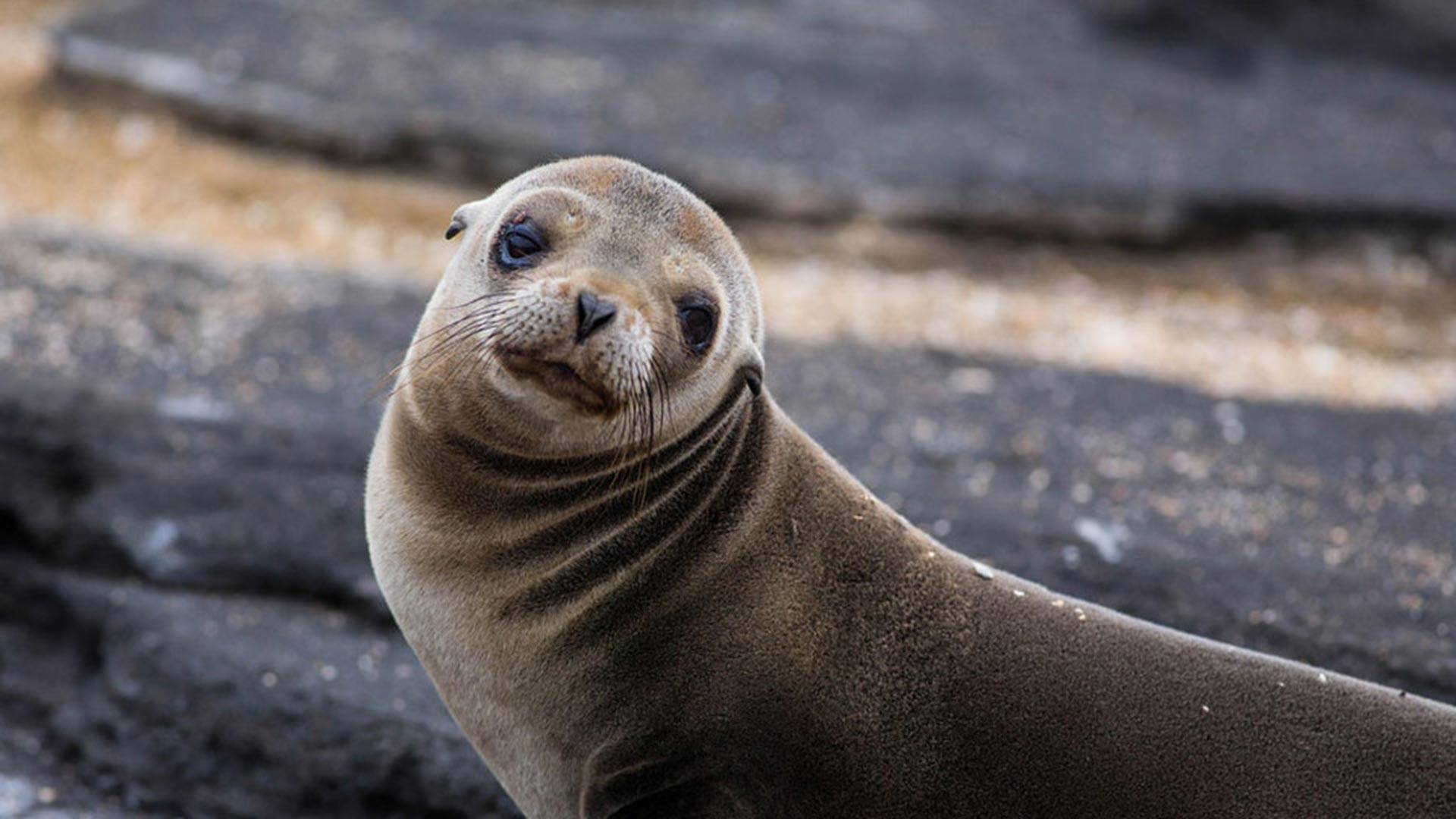 Telling the difference between Galapagos seals and ...
