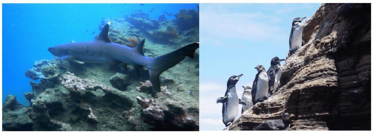 Underwater exploration trhough Island Hopping Program
