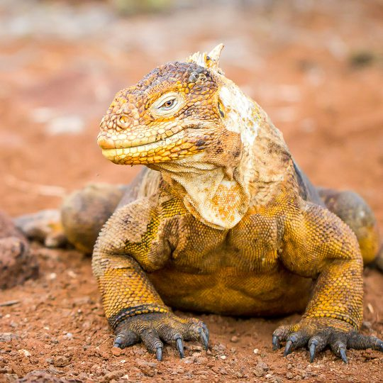 Observe the iconic species of Galapagos from Finch Bay Galapagos Hotel