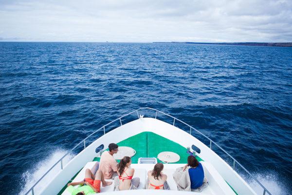 sea lion santa island