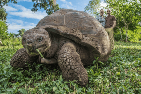 Giant turtle reserve in the highlands of Santa Cruz Island