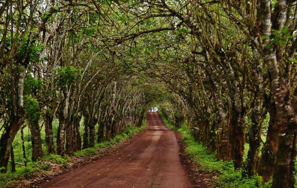 Tierras altas de la Isla Santa Cruz, Galápagos