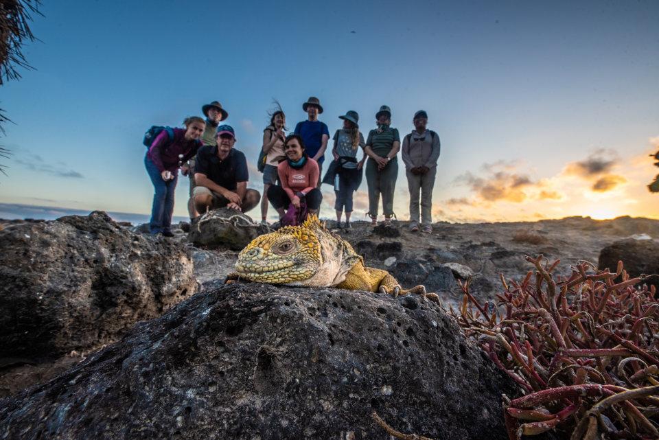 Iguana terrestre en Plaza Sur en las Islas Galápagos