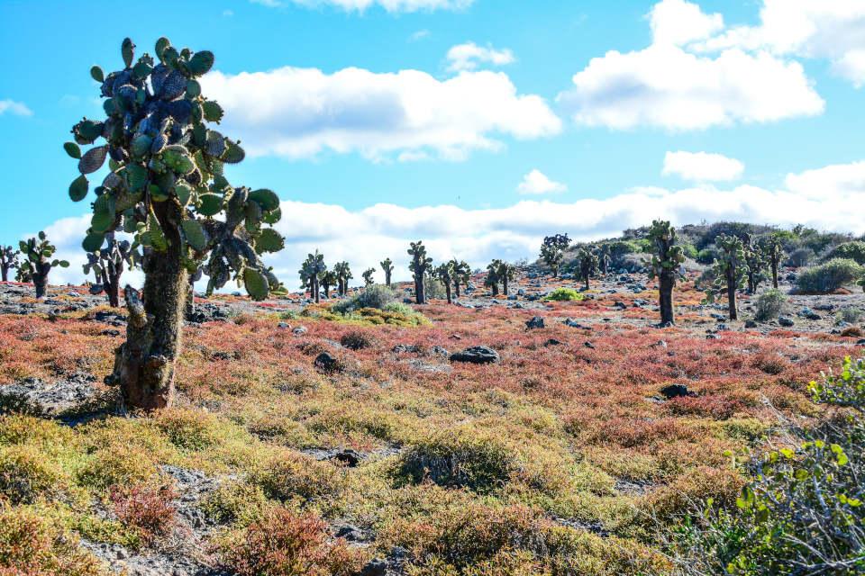 Cactus y suculentos en la Isla Plaza Sur en Galápagos