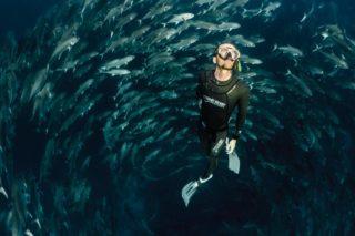 Buceo de superficie con un cardumen de peces en Galápagos