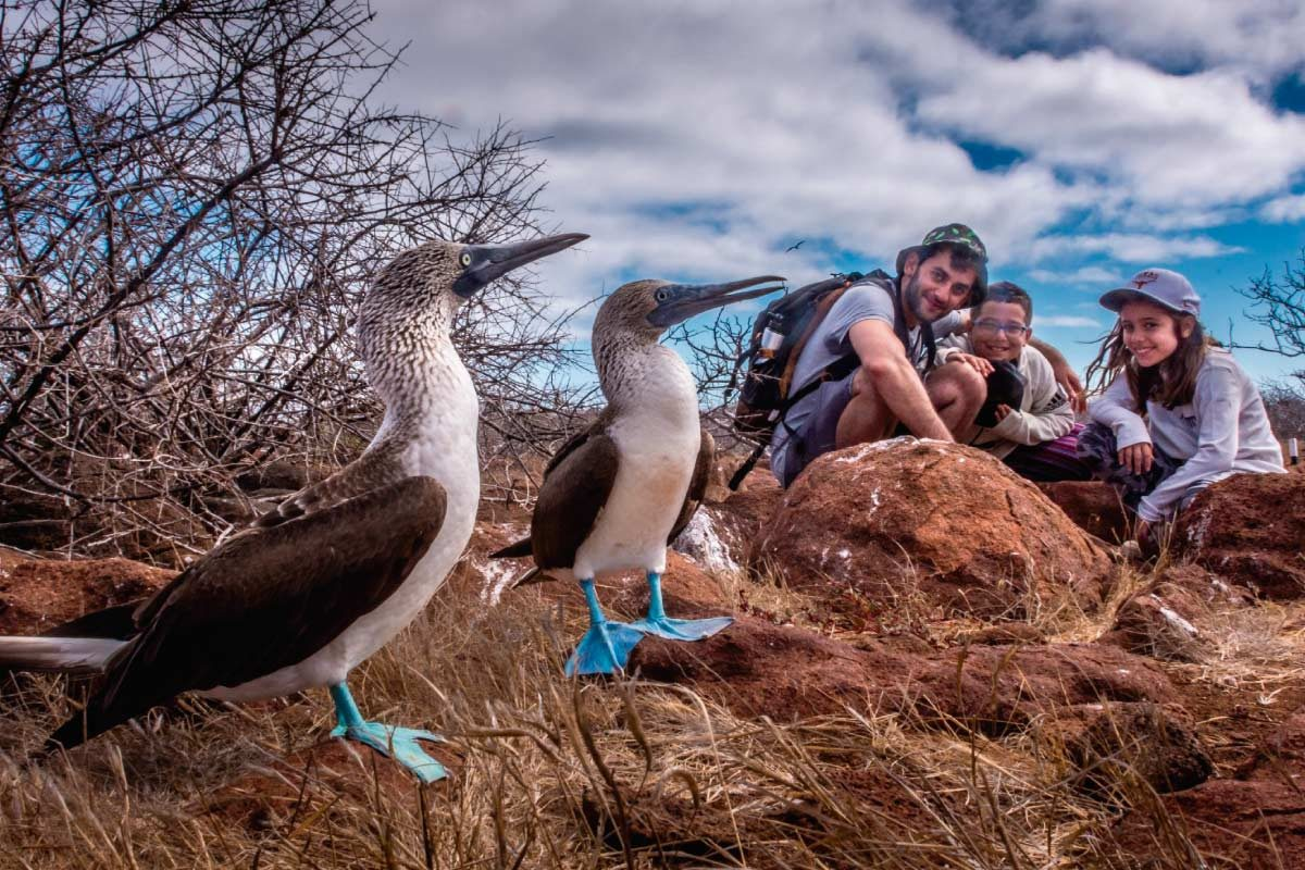 Blue-footed boobies and guests