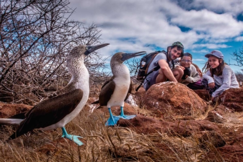 Blue-footed boobies found at North Seymour Island