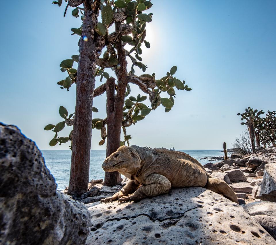 Isla Santa Fe en Galápagos