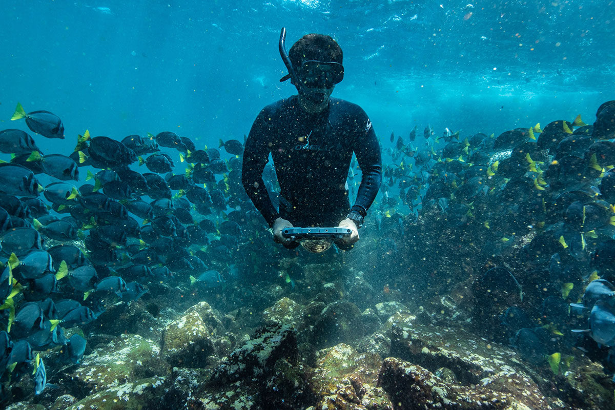 Snorkeling with marine life in Galapagos.