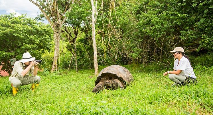 Galapagos giant tortoises in Santa Cruz Island's highlands.