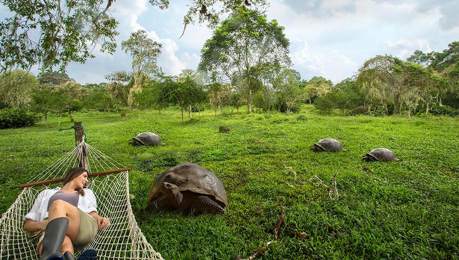 Giant Tortoises in Santa Cruz Island's highlands