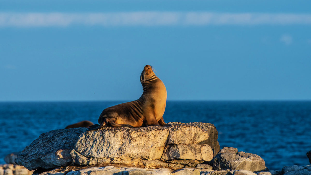 Sea lion spotted at South Plaza Island