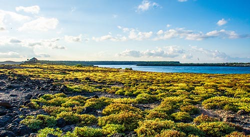 Galapagos land and sea tour