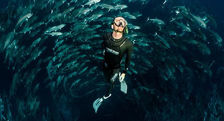 Paquete de buceo en Galápagos del Finch Bay Galapagos Hotel