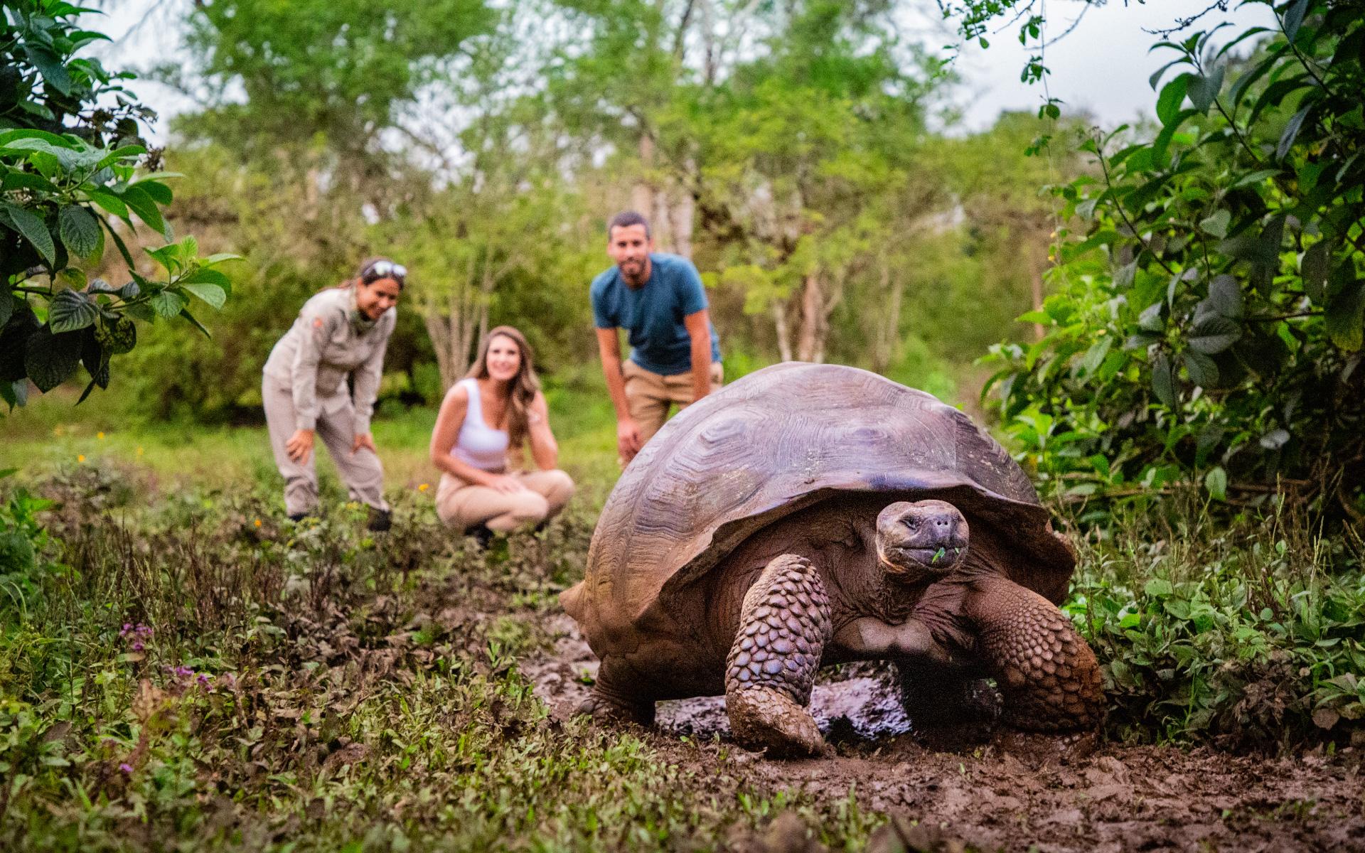 Galapagos giant tortoise at Manzanillo