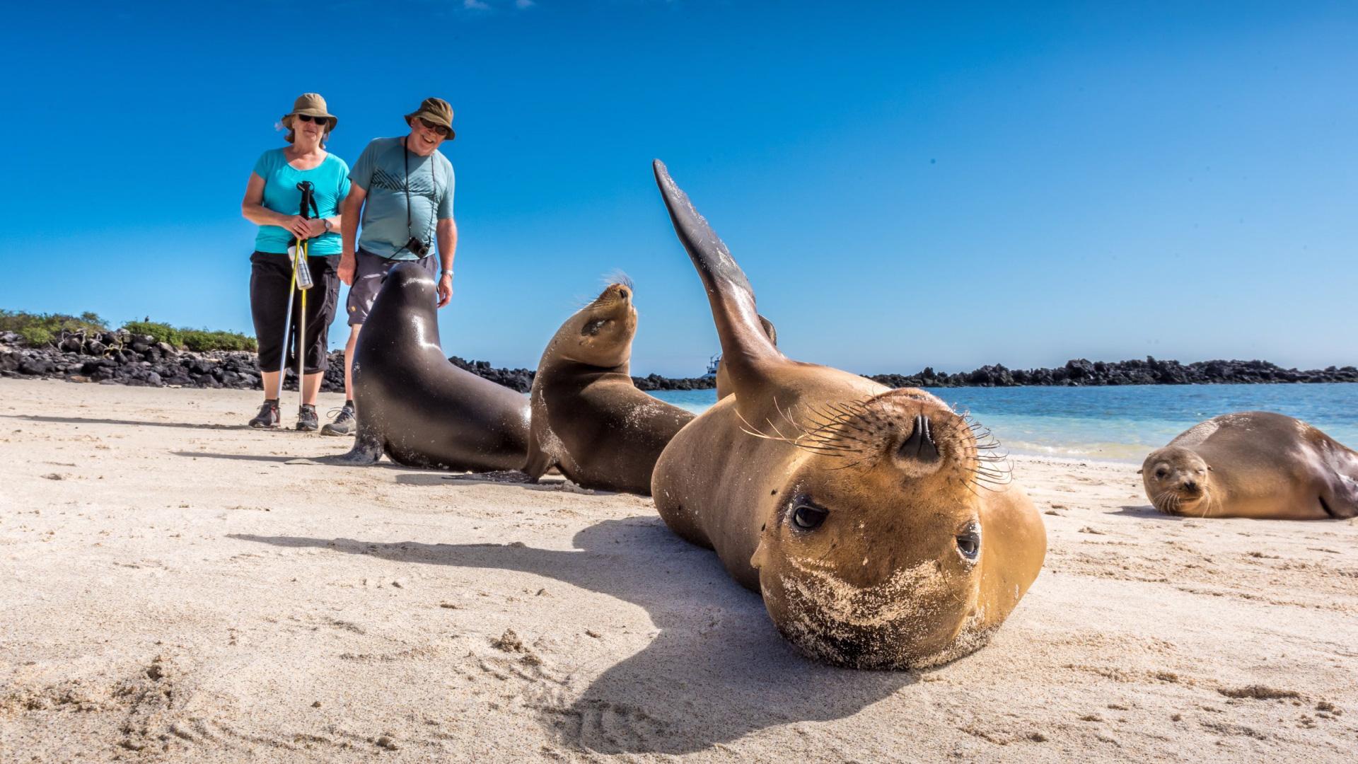Lobos marinos en la Isla Santa Fé, parte de las Islas Galápagos
