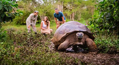 Turtle watching in Manzanillo, Galapagos