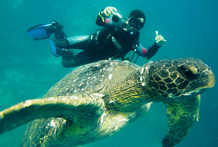 Guest spotting a sea turtle while diving in the Galapagos Islands