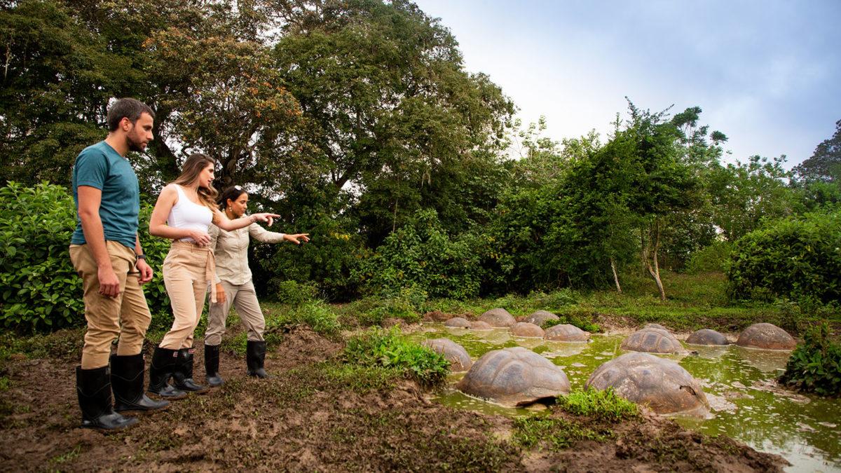 manzanillo-galapagos-islands-giant-tortoises-1200x675.jpg