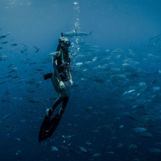 Buceo en las islas galápagos