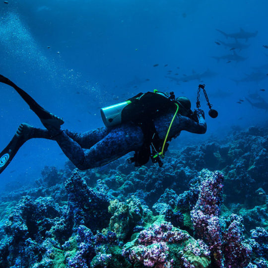 Experiencia de buceo en las aguas de las Islas Galápagos