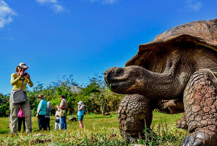 Tortuga Gigante de Galápagos en la parte alta de la Isla Santa Cruz