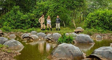 Visiting giant tortoises