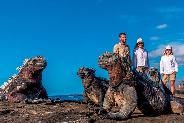 Galapagos Marine Iguanas basking in the sun